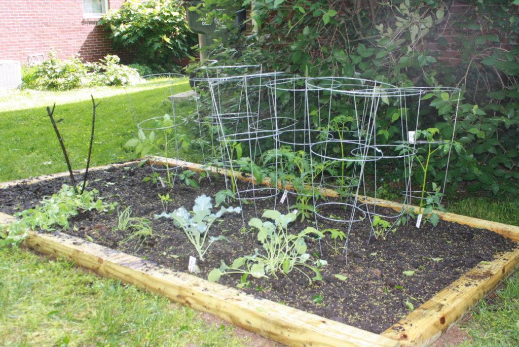 Vegetable Gardening For Beginners Gardening Ideas World