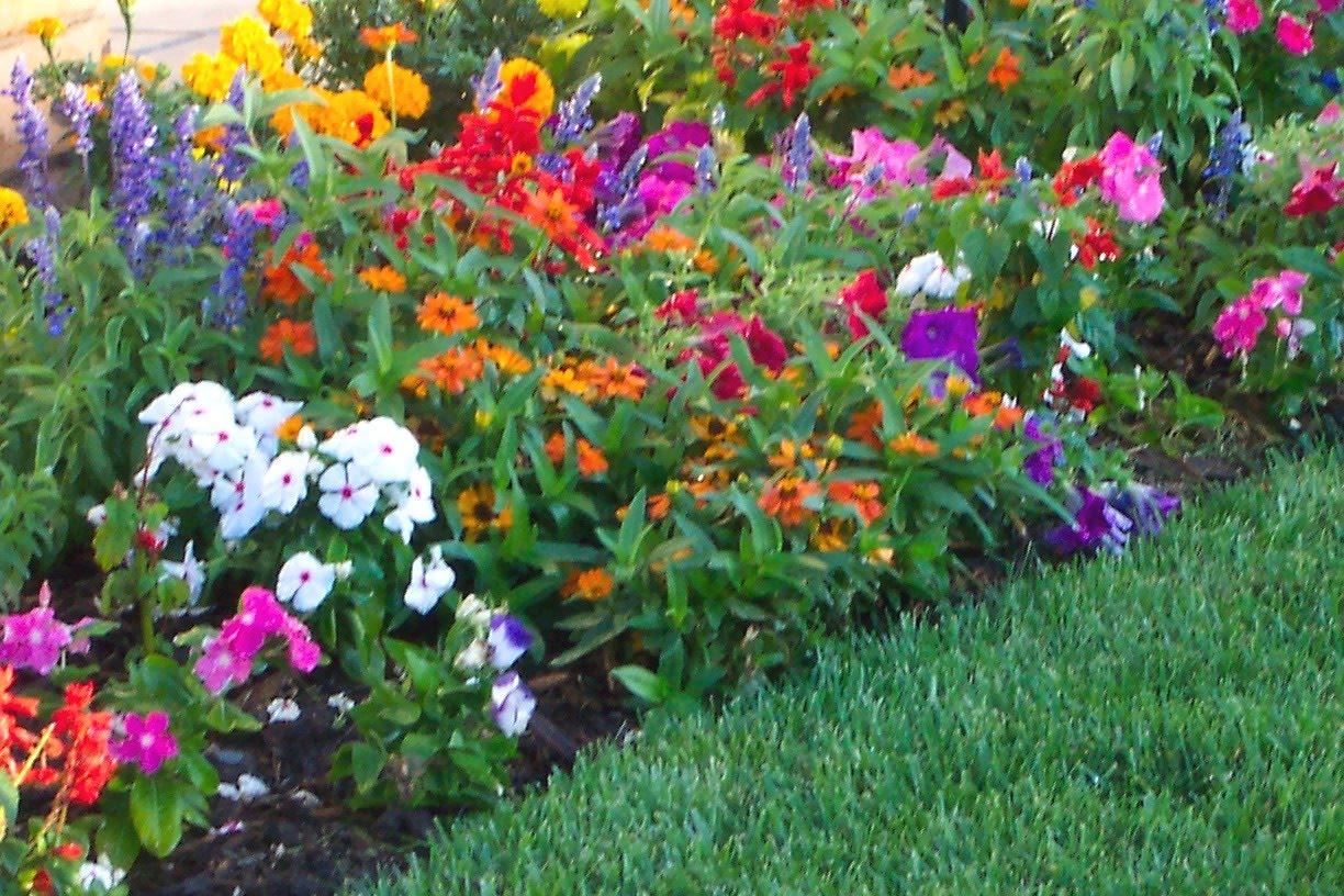 Follow These Steps To An Awesome Garden Gardening Ideas World