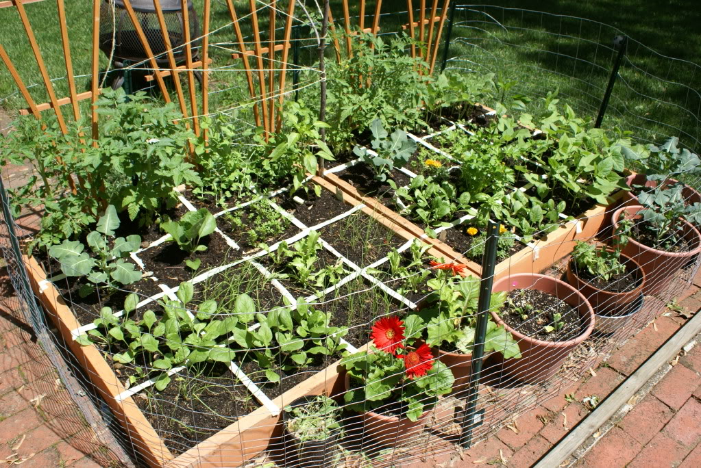 Vegetable Gardening for Beginners – Gardening Ideas World on