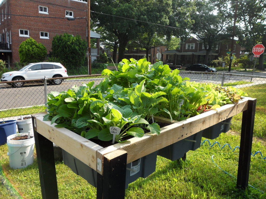 The 9 Best Gardening Tips and Tricks for Beginners – Gardening Ideas ...